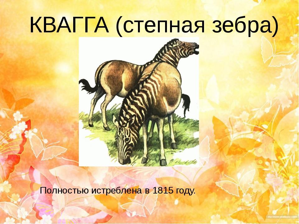 КВАГГА (степная зебра) Полностью истреблена в 1815 году.