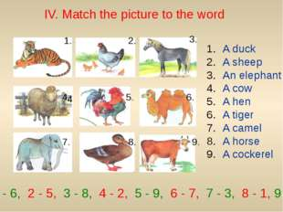IV. Match the picture to the word 1. 2. 3. 4. 4. 5. 6. 7. 8. 9. A duck A shee