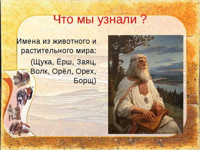 Что мы узнали ? Имена из животного и растительного мира: (Щука, Ёрш, Заяц, Во...