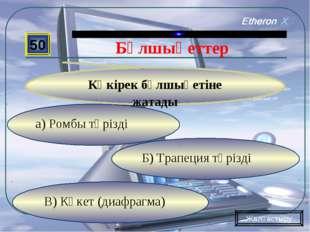 В) Көкет (диафрагма) Б) Трапеция тәрізді а) Ромбы тәрізді 50 Көкірек бұлшықет