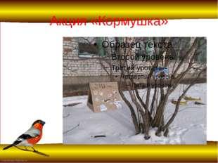 Акция «Кормушка» FokinaLida.75@mail.ru