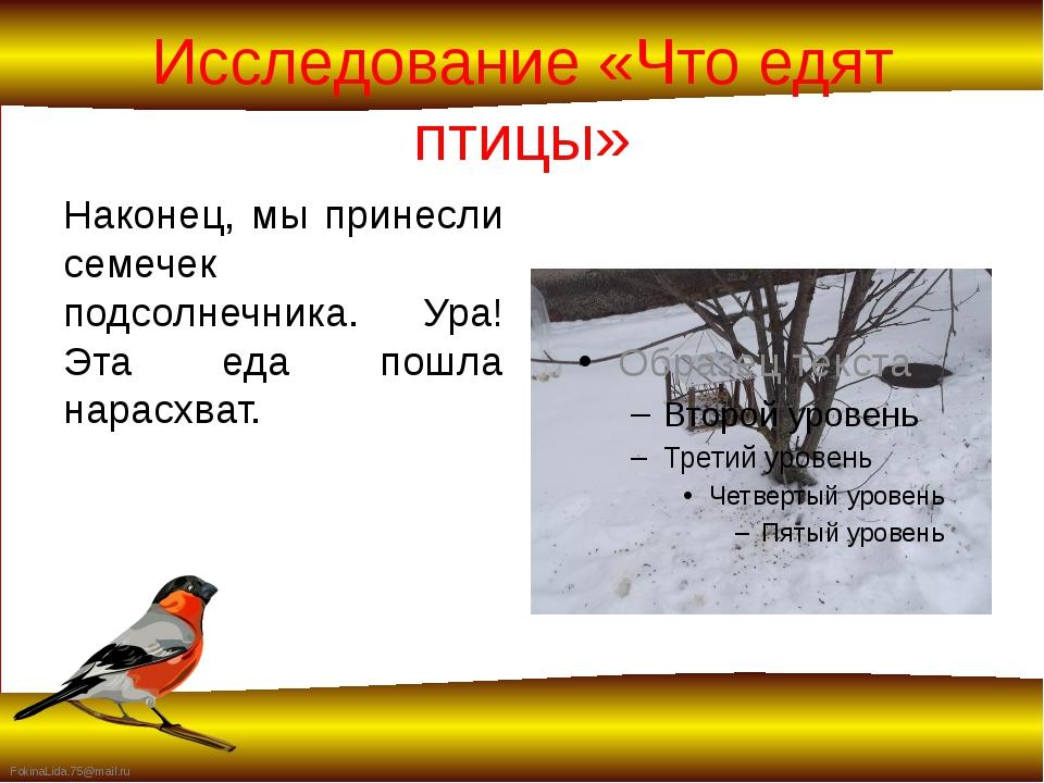 Исследование «Что едят птицы» Наконец, мы принесли семечек подсолнечника. Ура...