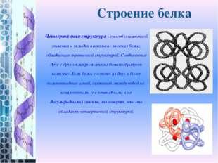 Четвертичная структура–способ совместной упаковки и укладки нескольких молек