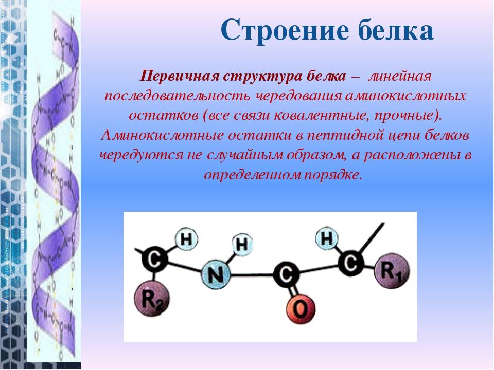 Строение белка Первичная структура белка– линейная последовательность чередо...
