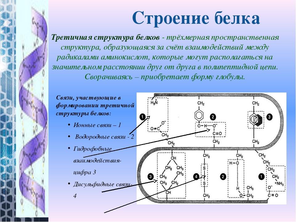 Третичная структура белков- трёхмерная пространственная структура, образующа...