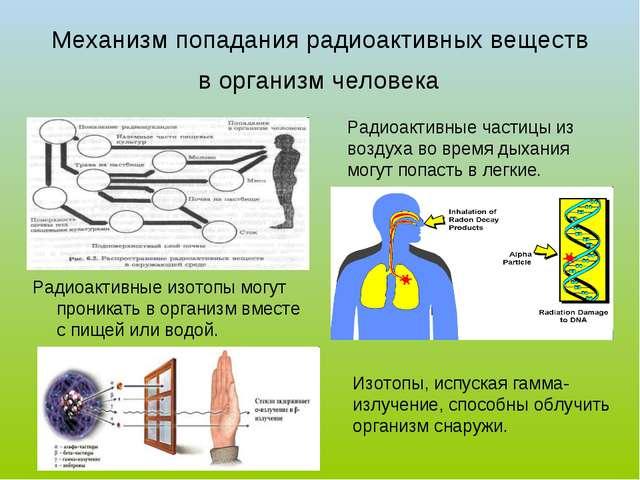 Механизм попадания радиоактивных веществ в организм человека Радиоактивные из...