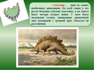 Стегозавр - один из самых необычных динозавров. По всей спине у его росли бо