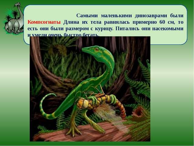 Самыми маленькими динозаврами были Компсогнаты Длина их тела равнялась приме...