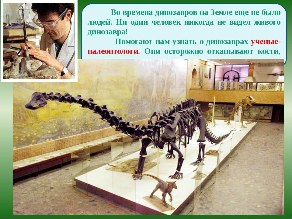 Во времена динозавров на Земле еще не было людей. Ни один человек никогда не...