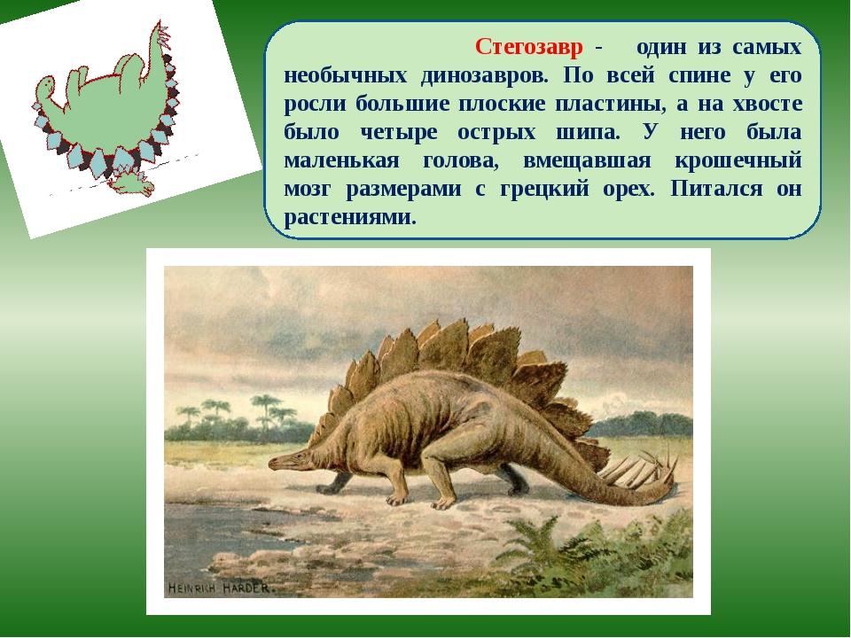 Стегозавр - один из самых необычных динозавров. По всей спине у его росли бо...
