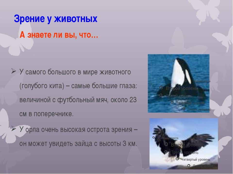 Зрение у животных У самого большого в мире животного (голубого кита) – самые...