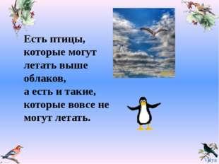 Есть птицы, которые могут летать выше облаков, а есть и такие, которые вовсе