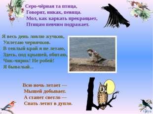 Серо-чёрная та птица, Говорят, никак, певица. Мол, как каркать прекращает, Пт