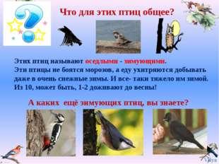 Что для этих птиц общее? А каких ещё зимующих птиц, вы знаете? Этих птиц назы