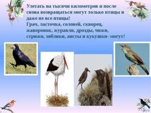 Улетать на тысячи километров и после снова возвращаться могут только птицы и