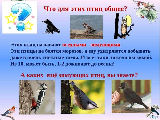 Что для этих птиц общее? А каких ещё зимующих птиц, вы знаете? Этих птиц назы...