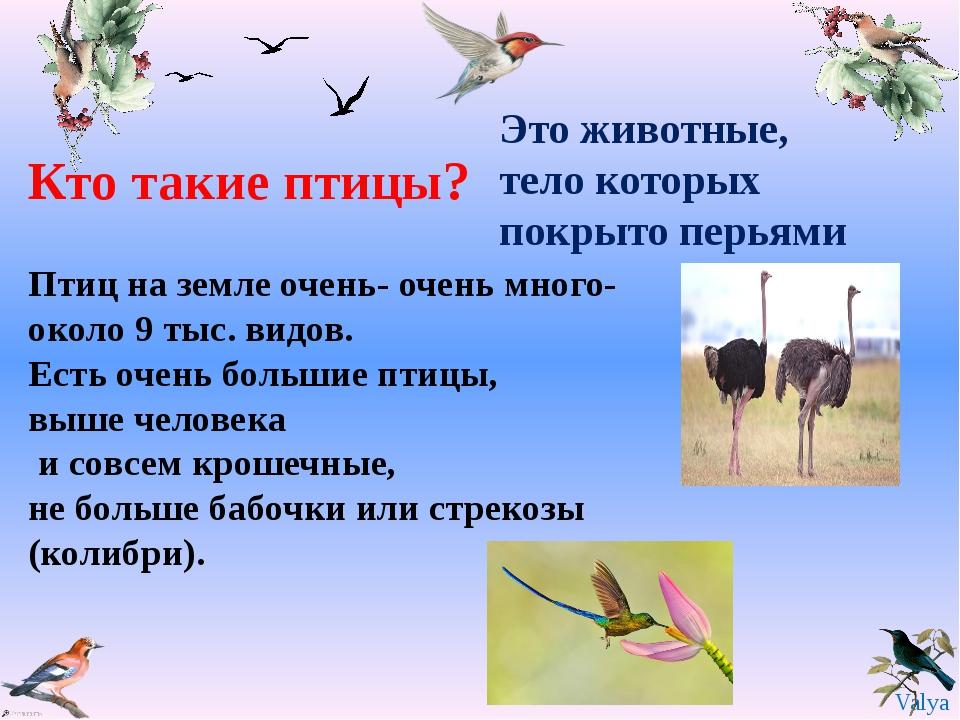 Птиц на земле очень- очень много- около 9 тыс. видов. Есть очень большие птиц...