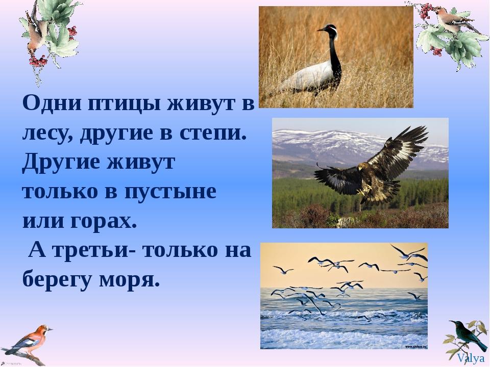 Одни птицы живут в лесу, другие в степи. Другие живут только в пустыне или го...