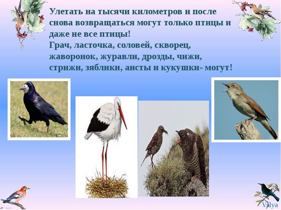 Улетать на тысячи километров и после снова возвращаться могут только птицы и...