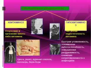 Виды витаминной недостаточности АВИТАМИНОЗ ГИПОВИТАМИНОЗ Отсутствие в органи