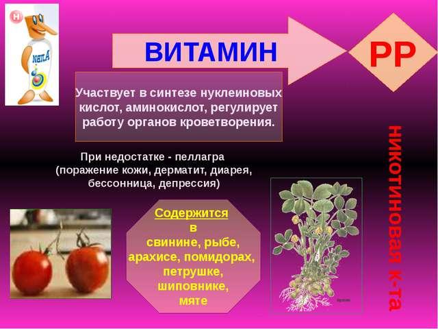 ВИТАМИН PP никотиновая к-та Участвует в синтезе нуклеиновых кислот, аминокисл...