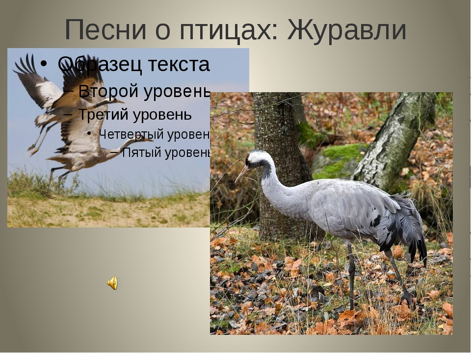 Песни о птицах: Журавли