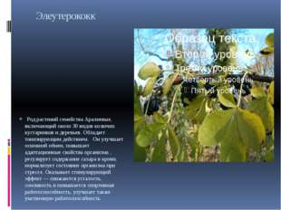 Элеутерококк Род растений семейства Аралиевые, включающий около 30 видов кол