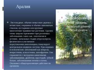 Аралия Листопадные, обычно невысокие деревья, с ветвистым у вершины и обычно