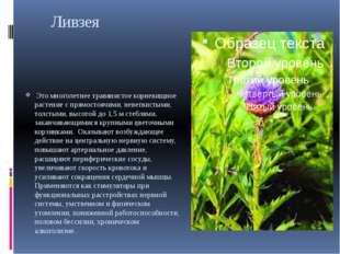 Ливзея Это многолетнее травянистое корневищное растение с прямостоячими, нев