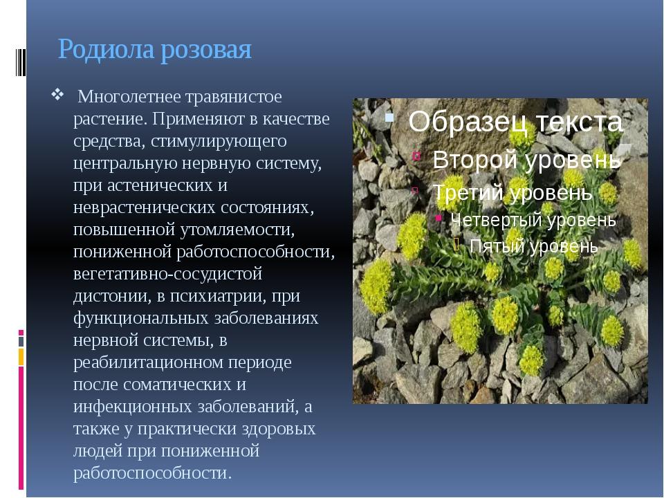 Родиола розовая Многолетнее травянистое растение. Применяют в качестве средс...