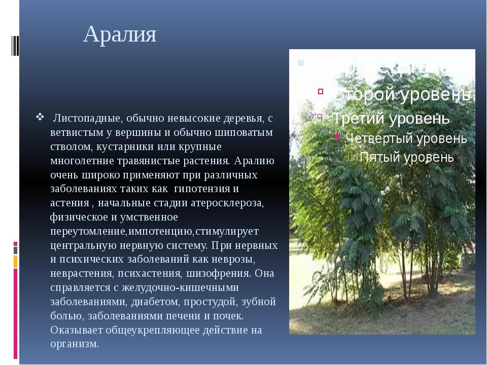 Аралия Листопадные, обычно невысокие деревья, с ветвистым у вершины и обычно...