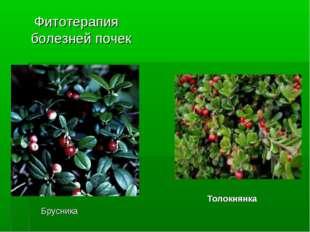 Фитотерапия болезней почек Брусника Толокнянка