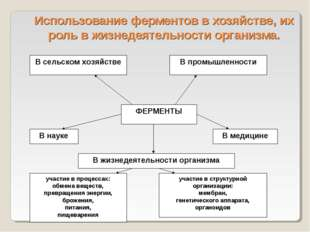 Использование ферментов в хозяйстве, их роль в жизнедеятельности организма.