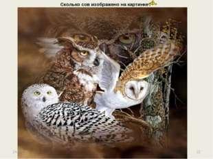Сколько сов изображено на картинке? * *