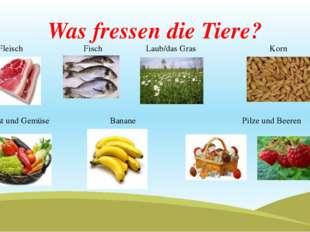 Was fressen die Tiere? Fleisch Fisch Laub/das Gras Korn Obst und Gemüse Banan