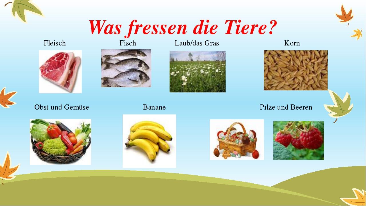 Was fressen die Tiere? Fleisch Fisch Laub/das Gras Korn Obst und Gemüse Banan...
