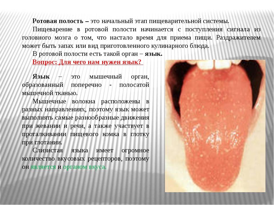 Ротовая полость – это начальный этап пищеварительной системы. Пищеварение в р...
