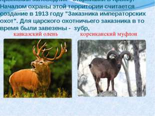 Крымский заповедник - старейший в Крыму. Началом охраны этой территории счита