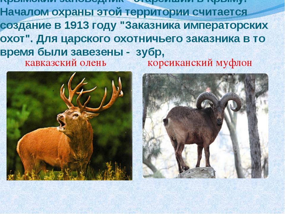 Крымский заповедник - старейший в Крыму. Началом охраны этой территории счита...