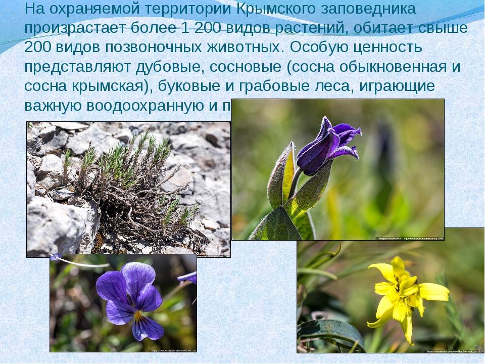 На охраняемой территории Крымского заповедника произрастает более 1 200 видов...