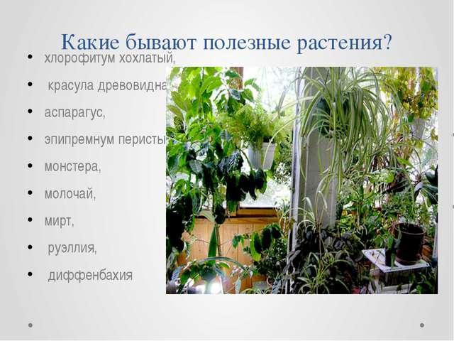 Какие бывают полезные растения? хлорофитум хохлатый, красула древовидная, асп...