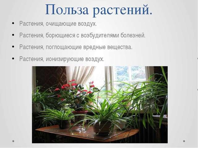 Польза растений. Растения, очищающие воздух. Растения, борющиеся с возбудител...