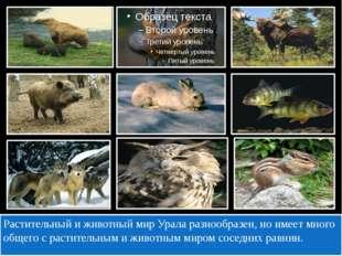 Растительный и животный мир Урала разнообразен, но имеет много общего с раст