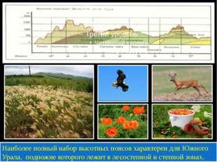 Наиболее полный набор высотных поясов характерен для Южного Урала, подножие