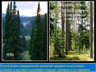 В результате климатических различий западных и восточных склонов существуют