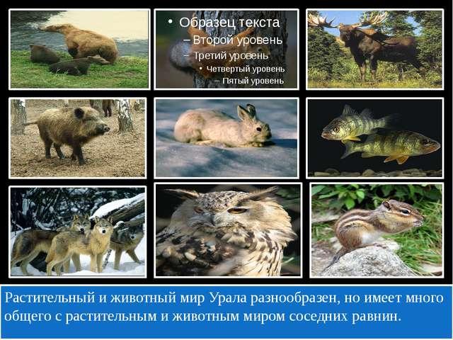Растительный и животный мир Урала разнообразен, но имеет много общего с раст...