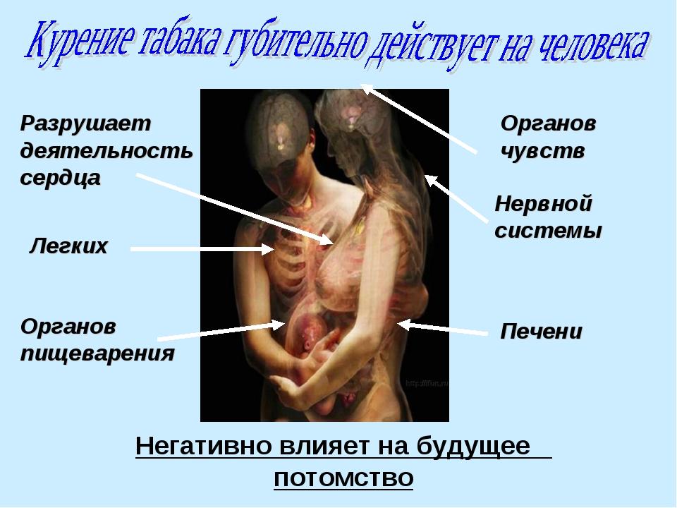 Разрушает деятельность сердца Легких Органов пищеварения Нервной системы Пече...