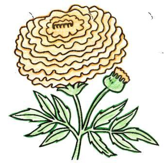 marigold looking in the mirror coloring page coloringcom