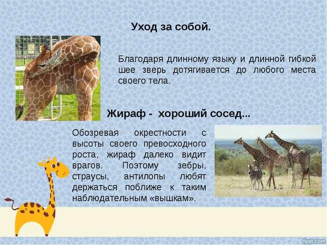 Уход за собой. Жираф - хороший сосед... Благодаря длинному языку и длинной ги...