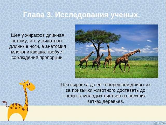 Глава 3. Исследования ученых. Шея у жирафов длинная потому, что у животного д...